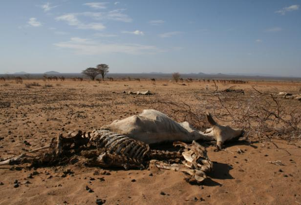 kenya-the-great-drought