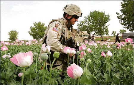US soldier in opium field