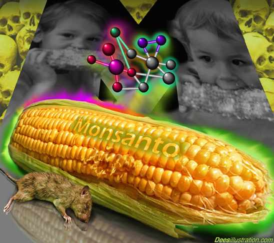 Monsanto Plans To Sell Sweet Corn In Your Local Supermarket | Co ...