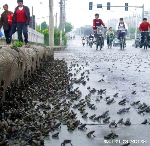 frogs-china-sichuan-earthquake