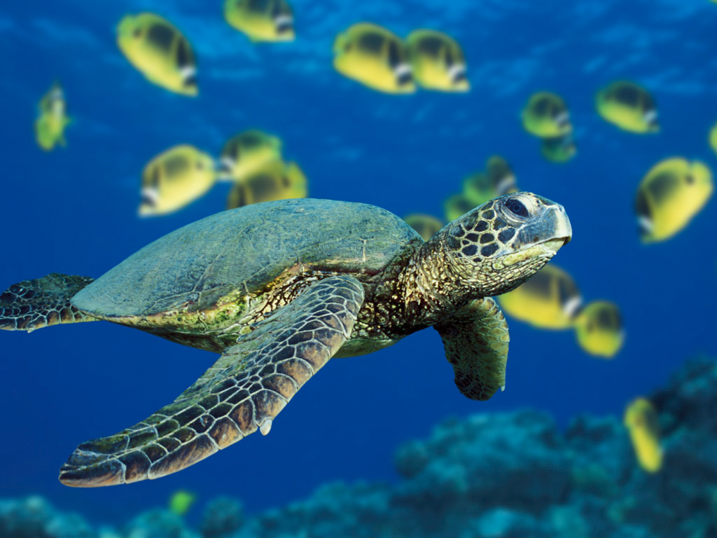 sea_turtle