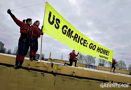 greenpeace_gm_rice_protest_rotterdam_harbour