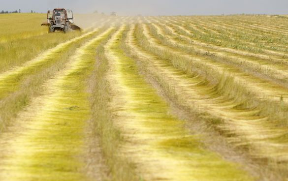 russia_worst-drought-in-a-decade-high-temperatures-damaged-32-percent-of-land-under-cultivation-grain-prices-may-double