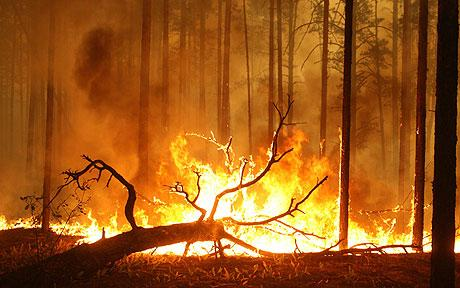 russian-heatwave-kills-5000-as-fires-rage-out-of-control-02