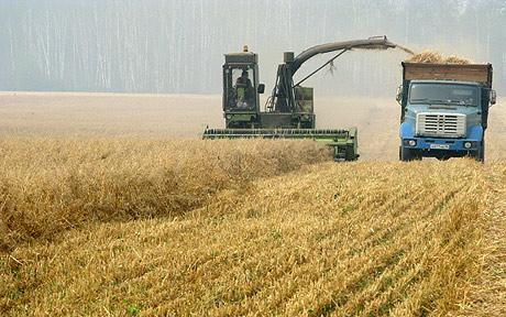 global-food-shortage-fears-as-russia-extends-wheat-ban