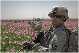 Afghanistan-poppies