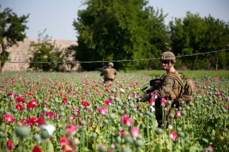 Photos of U.S. and Afghan Troops Patrolling Poppy Fields June 2012-13