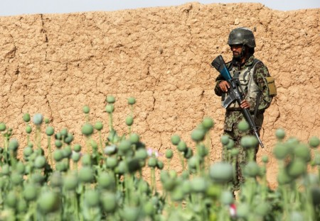 Photos of U.S. and Afghan Troops Patrolling Poppy Fields June 2012-15
