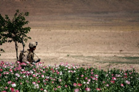Photos of U.S. and Afghan Troops Patrolling Poppy Fields June 2012-17