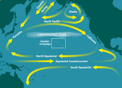 North_Pacific_Subtropical_Convergence