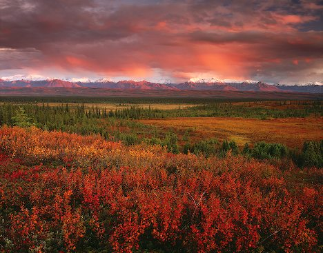 View across the Tundra in Denali National Park