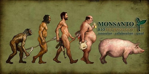 monsanto evolution