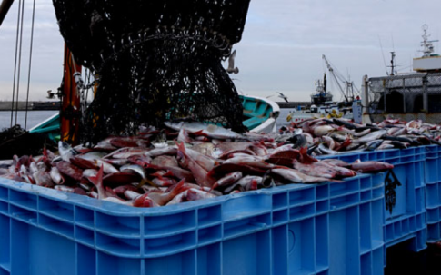 South Korea Returns 20 Tons Of Radioactive Japan Seafood