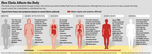 How Ebola Affects The Body