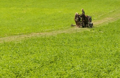 The Amish Farmers Reinventing Organic Agriculture