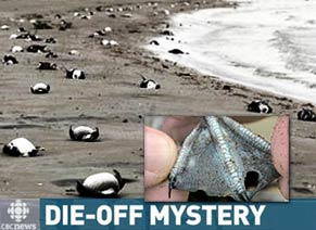 die-off of birds on entire West Coast