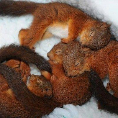 squirrel babies