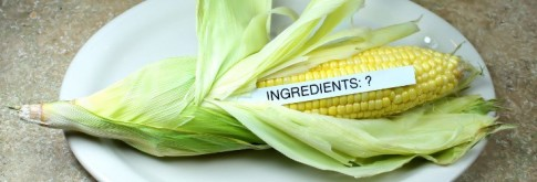 gmo_Corn_ingredients