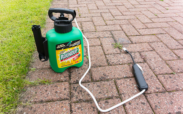 Roundup weedkiller contains glyphosate which the WHO has said is probably carcinogenic to humans