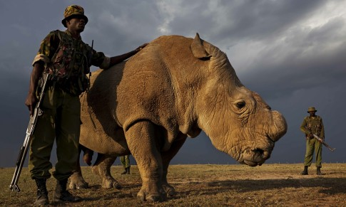 Sudan-the-last-male-northern-white-rhino