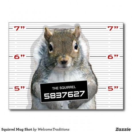 Squirrel-Mug-Shot-Facebook-Shelby-Township-Police-Department