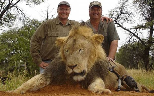 Walter Palmer killed Cecil the Lion with a bow to show off – and now he's discovering what it's like to be hunted