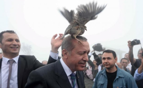 Erdogan-Bird