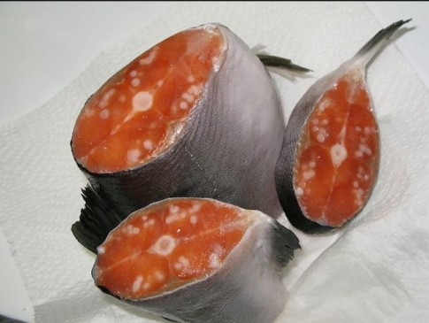 This is what the tumors inside three separate Salmon looked like