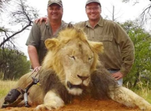 CECIL-THE-LION2