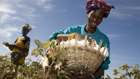 monsanto-africa-cotton-failure