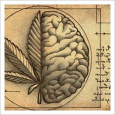 endocannabinoid-system-and-cbd