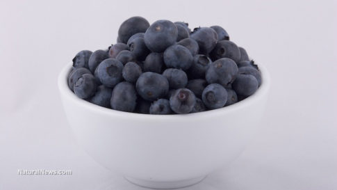 Blueberries-In-A-White-Bowl