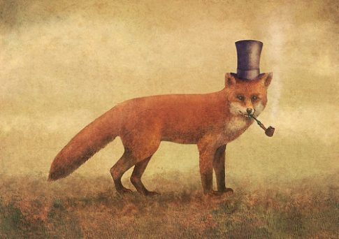 fox tophat