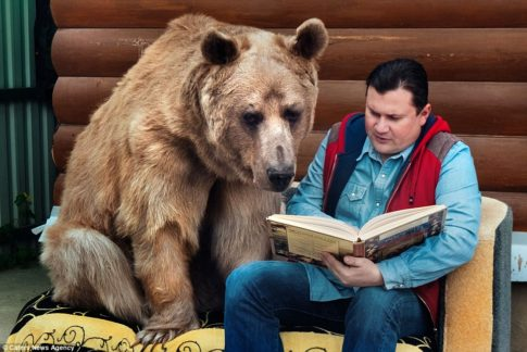 Svetlana and Yuriy Panteleenko adopted the bear named Stepan when he was aged just three months-2