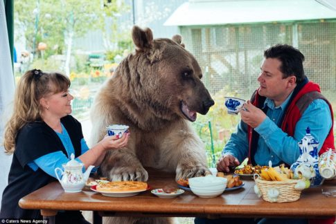 Svetlana and Yuriy Panteleenko adopted the bear named Stepan when he was aged just three months
