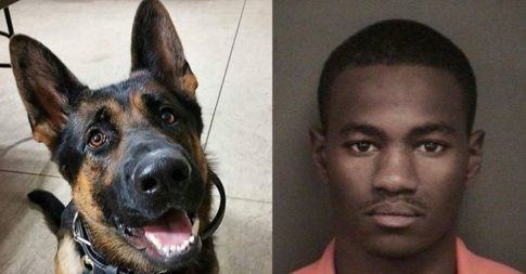 Man Who Killed Police Dog Sentenced to 45-Years in Prison