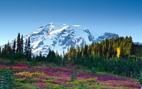 mountain_sky_flowers_fir-trees