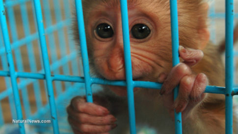 baby-monkey-cage