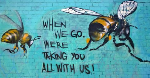 bees-pesticides-neonics