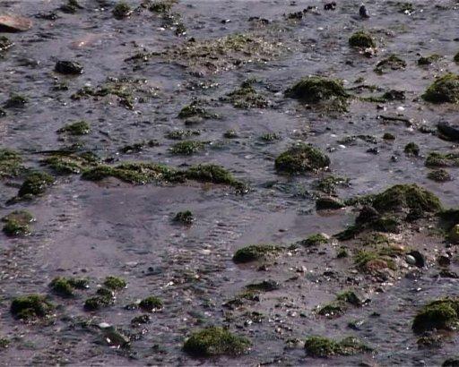 toxic-seaweed