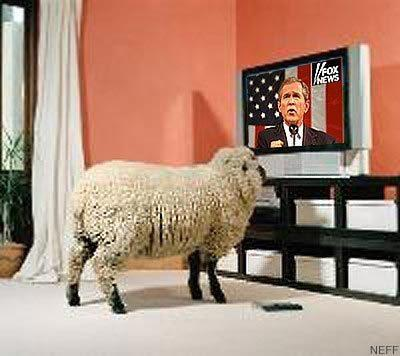 us-sheep