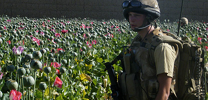 soldier-opium-field-afghanistan