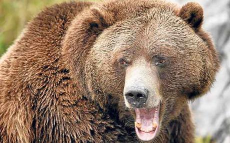 bear-market-rally