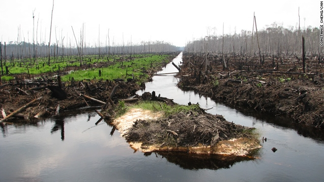 indonesia-rainforests-destruction