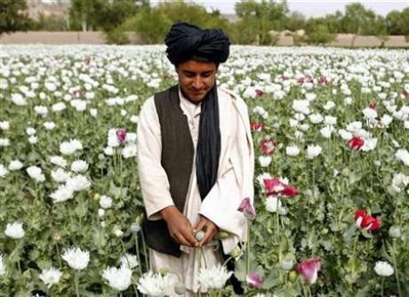 afghan-surge-troops-wont-target-drug-crops