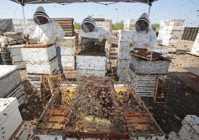 Food and Farm Disappearing Bees