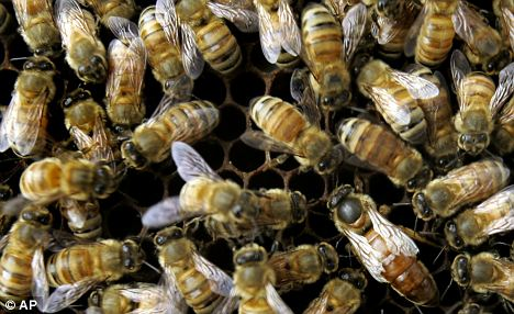 bees-billions-of-colonies-die-worldwide
