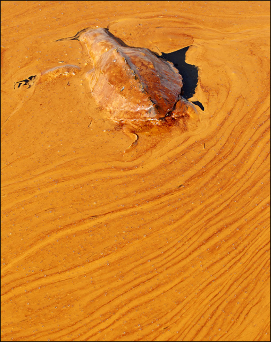 gulf-of-mexico-oil-spill_02