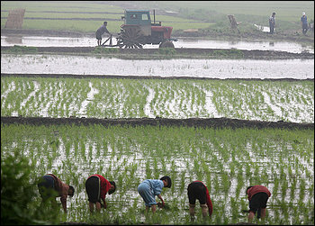 north-korea-lifts-restrictions-on-private-markets-as-last-resort-in-food-crisis