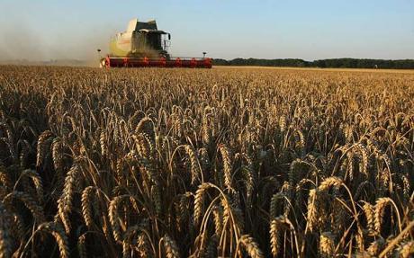 wheat_0000001